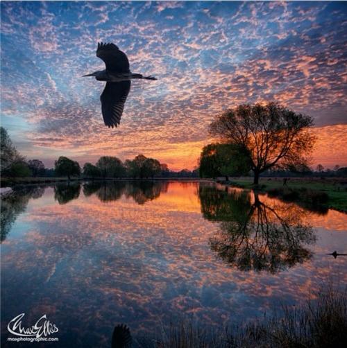 photo_BushyPark_Pond_MaxEllis1