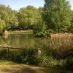 barnes-pond