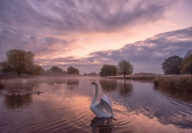 Teddington Town Photo of the Week
